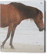 Wild Horses On The Beach 2 Acrylic Print