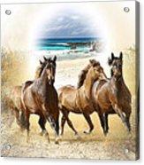 Wild Horses On The Beach Acrylic Print