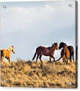 Wild Horses On The Bisti Acrylic Print