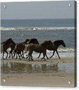 Wild  Horses Run On The Beach Acrylic Print