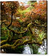 Wild Japanese Maple Acrylic Print