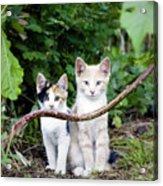 Wild Kats Acrylic Print