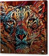 Wild Leopard Acrylic Print