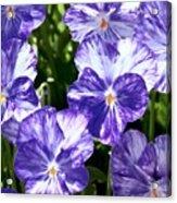 Wild Mountain Flowers Acrylic Print