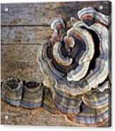 Wild Mushroom Acrylic Print