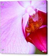 Wild Orchid 2 Acrylic Print