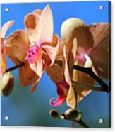 Wild Orchid Acrylic Print