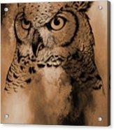 Wild Owl Eyes Acrylic Print