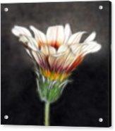 Wild Petal Dreams Acrylic Print