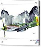 Wild Ponys Acrylic Print by Trenton Hill