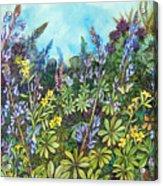 Wild Prairie Lupine Acrylic Print
