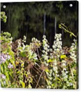 Wild Riverside Weeds And Flowers Acrylic Print