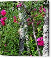 Wild Rose In Sumac Acrylic Print