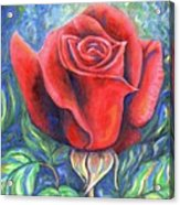 Wild Rose One Acrylic Print