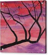 Wild Sky And Tree Acrylic Print
