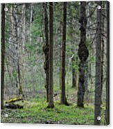 Wild Spring Forest Acrylic Print