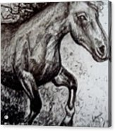 Wild Stallion Acrylic Print