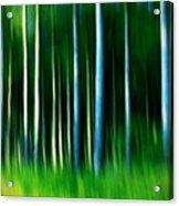 Wild Stripes Acrylic Print