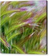 Wild Summer Grass Acrylic Print