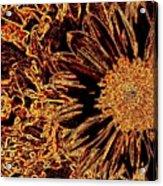 Wild Sunflower Abstract Acrylic Print