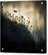 Wild Things - Number 1 Acrylic Print