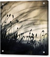 Wild Things - Number 2 Acrylic Print