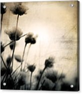 Wild Things - Number 3 Acrylic Print