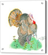 Wild Tom Acrylic Print
