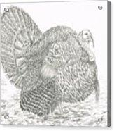 Wild Tom Turkey Acrylic Print