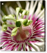 Wild Tropical Flower Acrylic Print