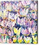 Wild Tulips Acrylic Print