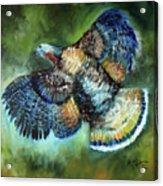 Wild Turkey In Flight Acrylic Print