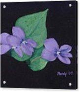 Wild Violets Acrylic Print