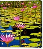 Wild Water Lilies 3 Acrylic Print