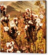 Wild West Mountain View Acrylic Print