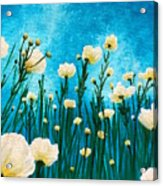 Poppies In The Blue Sky Acrylic Print