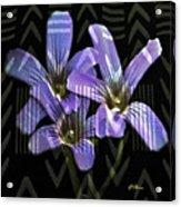 Wild Wildflowers Acrylic Print