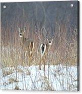Wild Winter Acrylic Print