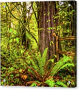 Wild Wonder In The Woods Acrylic Print