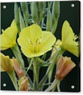 Wild Yellow Acrylic Print