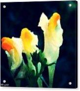 Wild Yellow Flowers On Dark Background Acrylic Print