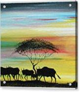 Wildbeest 1 Acrylic Print