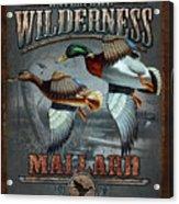 Wilderness Mallard Acrylic Print by JQ Licensing