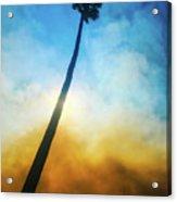 Wildfire Palm Acrylic Print
