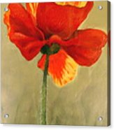 Wildflower 2 Acrylic Print