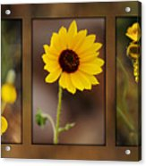 Wildflower 3 Acrylic Print