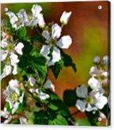 Wildflower 4 Acrylic Print
