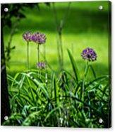 Wildflower Bloom Acrylic Print