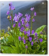 Wildflower Cascade Acrylic Print by Mike  Dawson