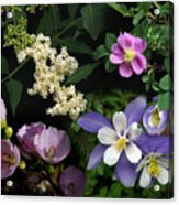 Wildflower Collage Acrylic Print